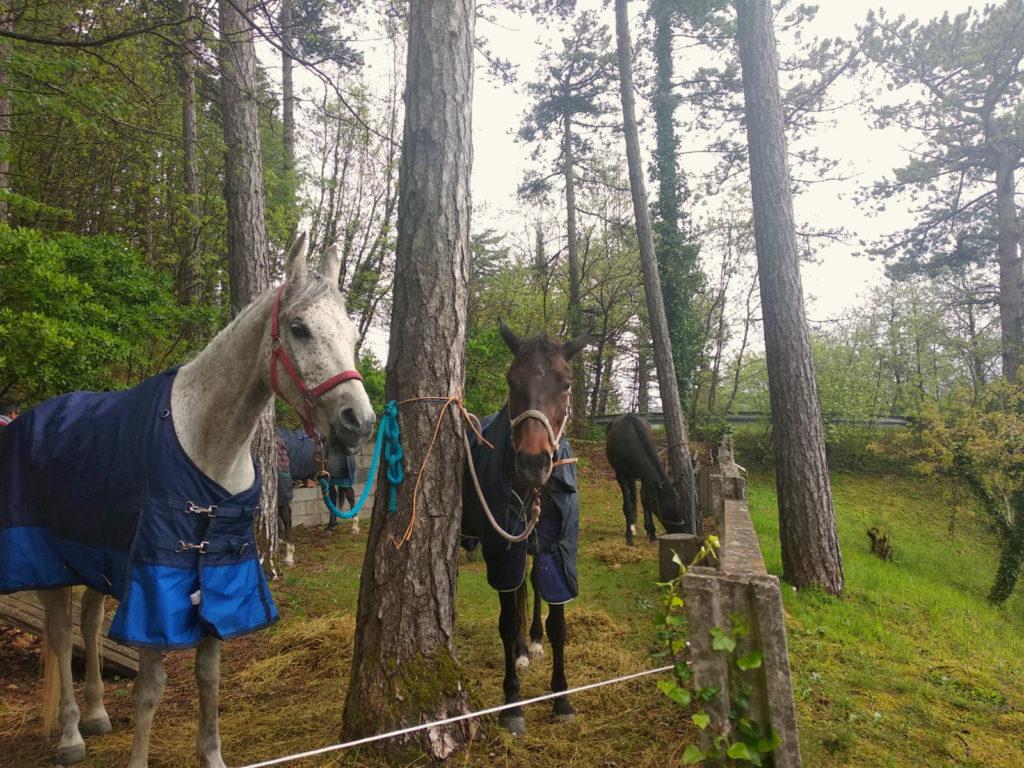 Cavalli a La Pineta